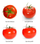 548px-Tomato_full.png